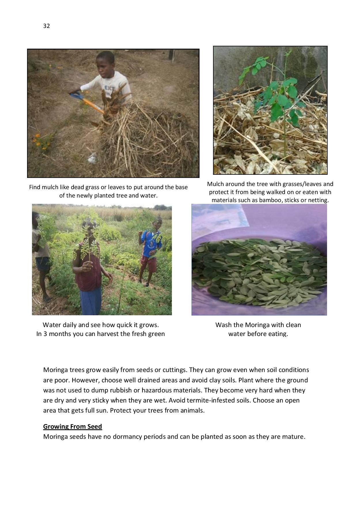 gen-ghana-youth-p-l-a-n-t-moringa-school-garden-manual-page-032